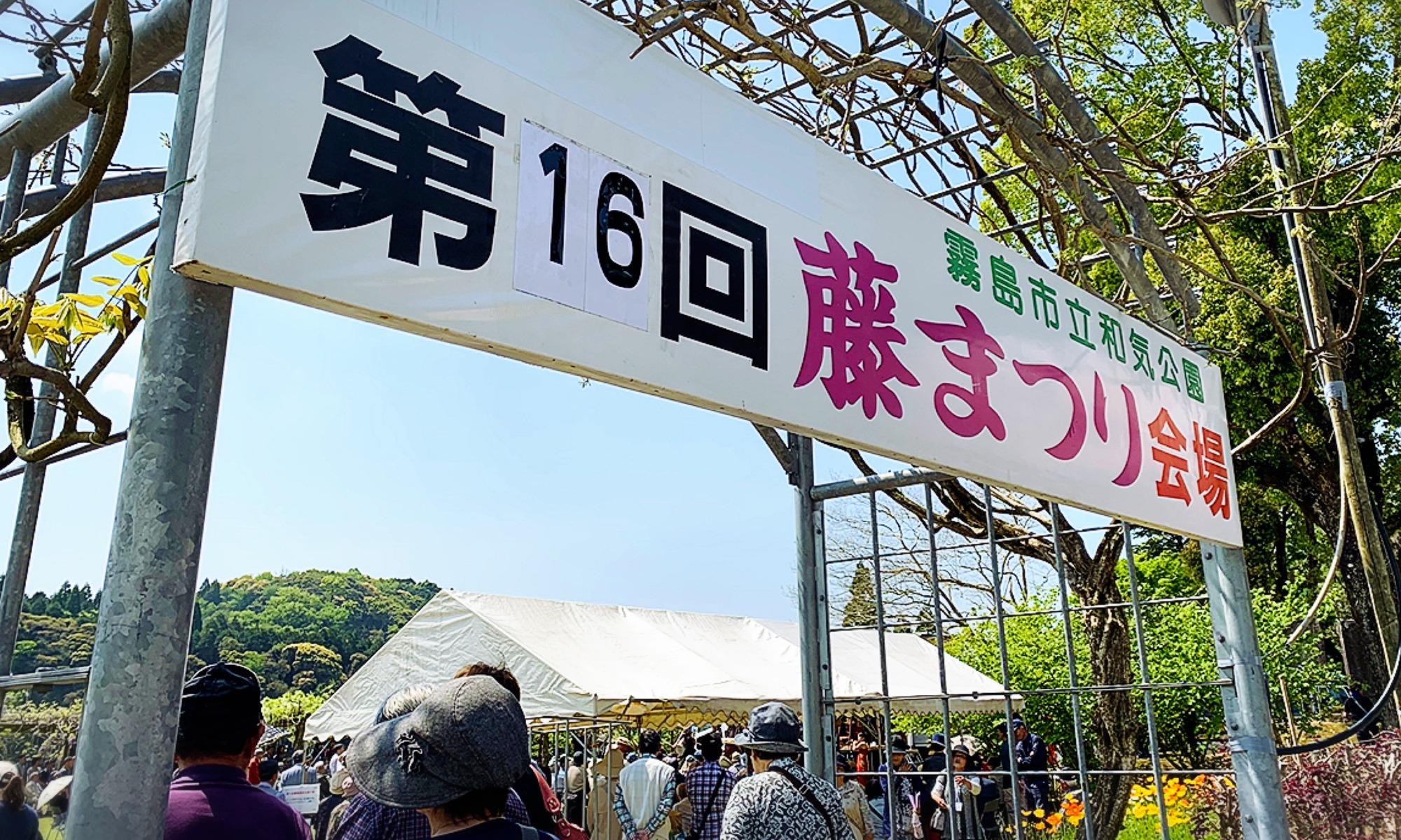 藤と九面太鼓「和気神社の藤祭り」