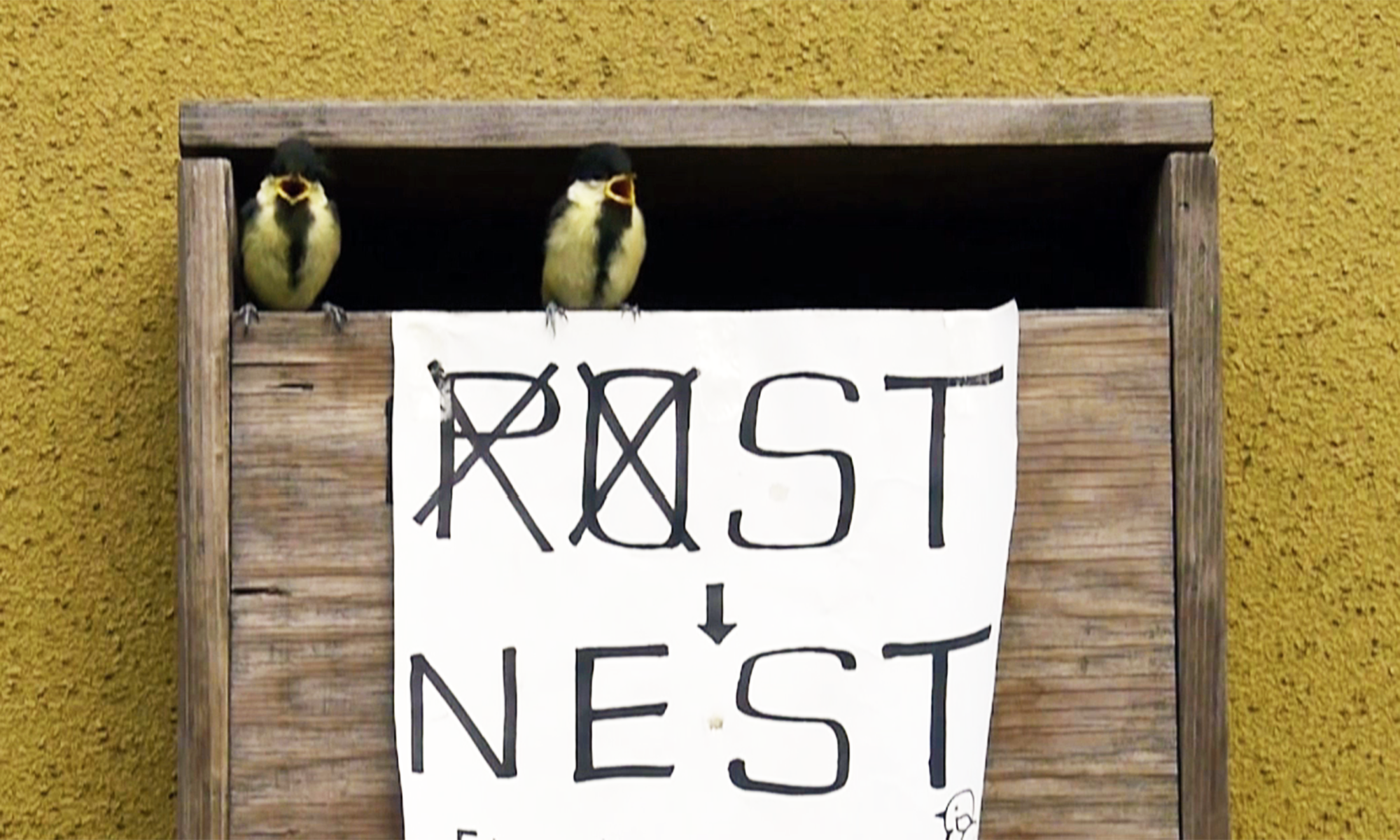 巣立ち「野鳥の巣」パート2