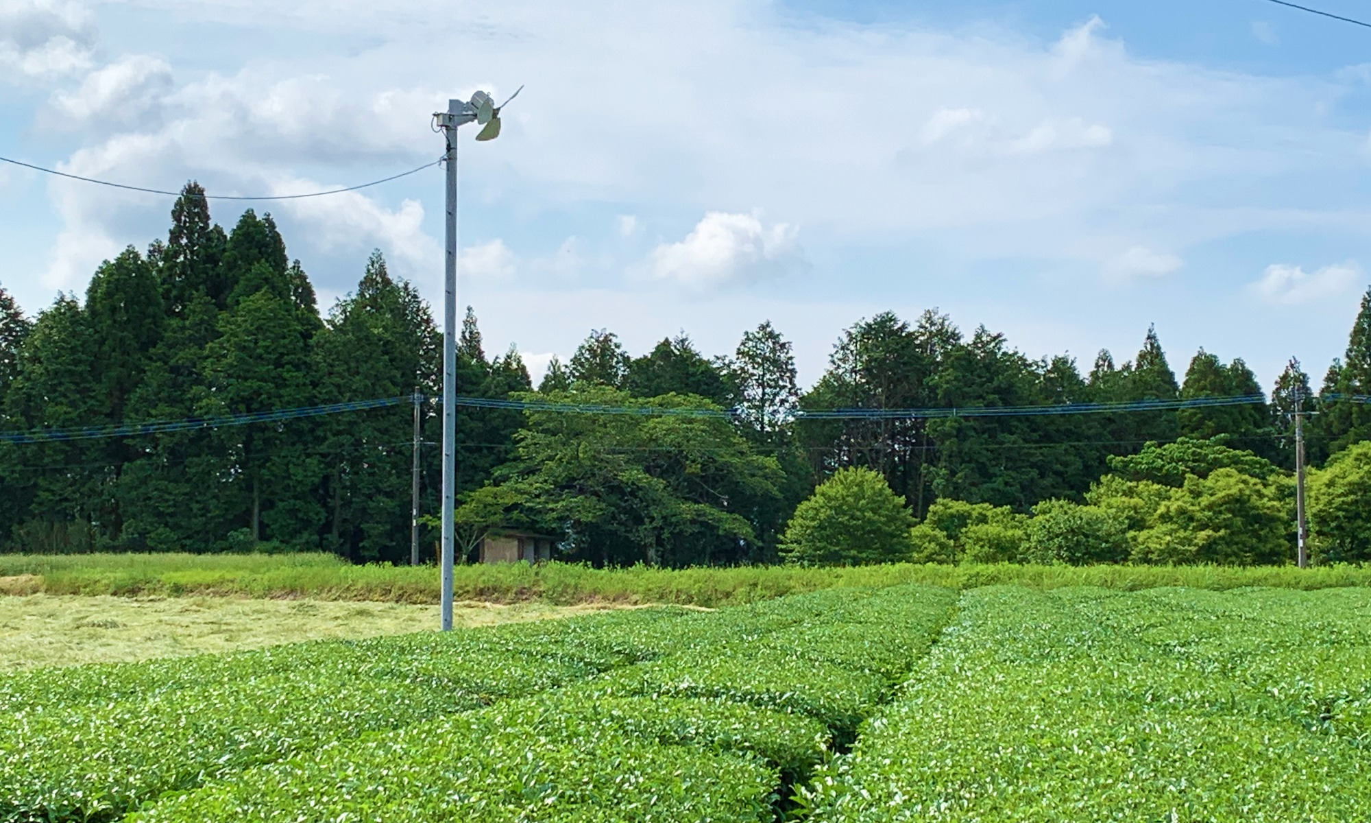 どでかい扇風機「茶畑」